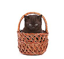 Cute black kitten in a basket Photographic Print