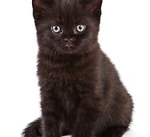 Black kitten by utekhina