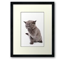 Funny gray kitten Framed Print