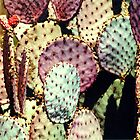 colourful prickly rackets by yvesrossetti