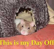 relaxed rat by mindgoop