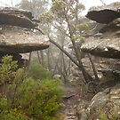along the mt rosea track by Andrew Cowell