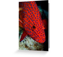 Polka Dots - Cocos (Keeling) Islands Greeting Card