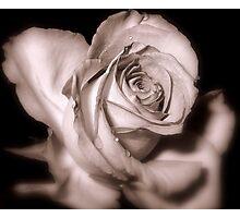 Rosebud Victoriana Photographic Print