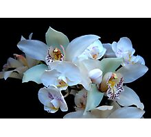A White Orchid Wedding Photographic Print