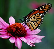 Beautiful Butterfly by dannytheniceguy