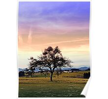 Old tree and amazing cloudy sky | landscape photography Poster