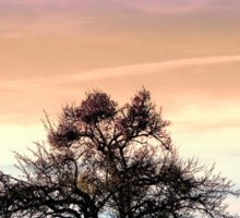 Old tree and amazing cloudy sky | landscape photography Sticker