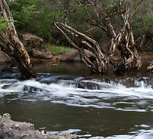 Lane Poole Reserve ~ Western Australia by EverChanging1