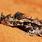 """Let Snoozing Dragons Lie"" Thorny Devil, Western Australia by wildimagenation"
