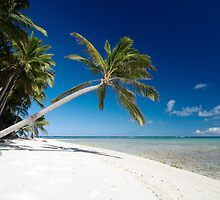 Lazy Palm - Cocos (Keeling) Islands by Karen Willshaw