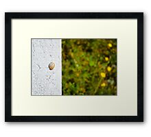 Snail shell and the negative space Framed Print