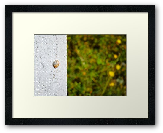 Snail shell and the negative space by Silvia Ganora