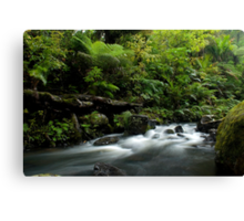 Small stream in the Waipoua Forest Canvas Print
