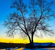 Winter Sunset by Julie Everhart