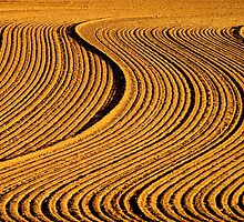 plowed... by Allan  Erickson