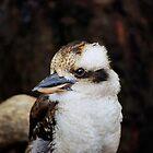 kookaburra  by eisblume