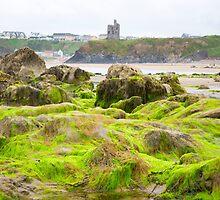 ballybunion castle algae covered rocks by morrbyte