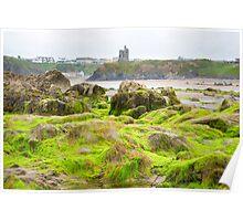 ballybunion castle algae covered rocks Poster