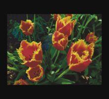 Fiery Tulips in Summertime Edmonton  Kids Clothes