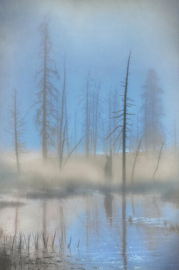 Tree Skeletons at Dawn.  Yellowstone National Park. Wyoming. USA. by photosecosse /barbara jones