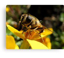 Honey Maker Canvas Print