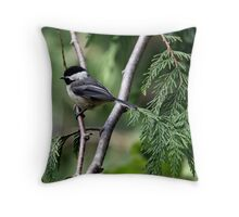 Black-Capped Chickadee In Western Redcedar Throw Pillow