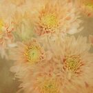 Whisper Mums by enchantedImages