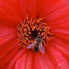 Just Buzzin 'Round! by Carol Clifford