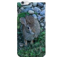WILD RABBIT CAME VISITING..PILLOW,TOTE BAG,CARD,PICTURE,ECT.. iPhone Case/Skin