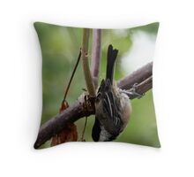 Black-Capped Chickadee (2010 Calendar Apr) Throw Pillow