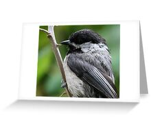 Portrait of a Black-Capped Chickadee Greeting Card