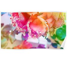 old withering rose rainbow flower Poster