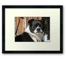 I'm Butch.. Framed Print