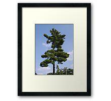 Britain Tree Framed Print