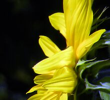 Yellow by tmtphotography