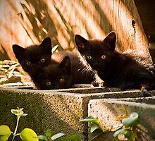 3 Little Kittens by georgiaart1974