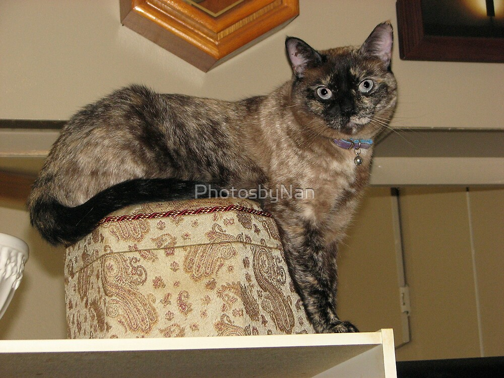 The Queen  Poses on a Hatbox by PhotosbyNan