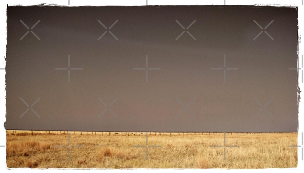 Fields of freedom by Fiona Christensen