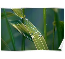 Fresh morning dew on green grass Poster