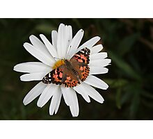 Pudge and Daisy Photographic Print