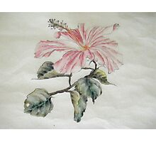Hibiscus, Chinese Style Photographic Print