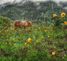Alpine Spring Pasture  by Boston Thek Imagery