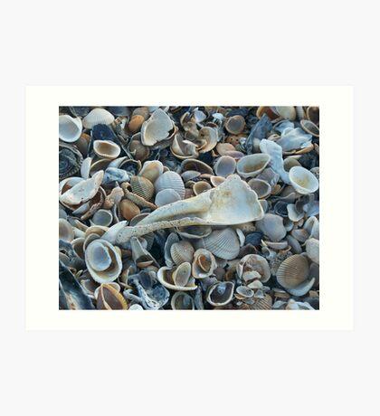Seashells, Seashells! Art Print