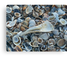 Seashells, Seashells! Canvas Print