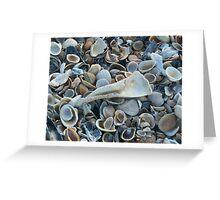 Seashells, Seashells! Greeting Card