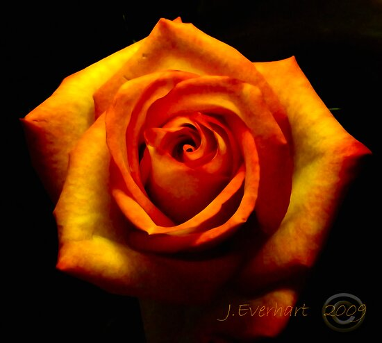 Fire Rose by Julie Everhart