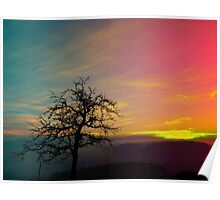 Old tree and colorful sundown panorama | landscape photography Poster
