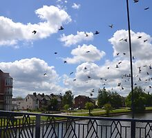 Fly Past at Exeter, Devon,UK by lynn carter
