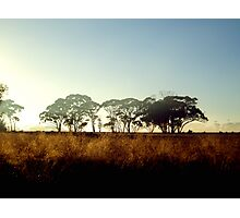 Wheatbelt Dawn Photographic Print